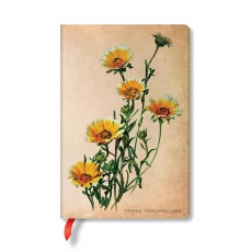 Notes w linie Woodland Daisies Mini, Paperblanks Painted Botanicals PB3575-6